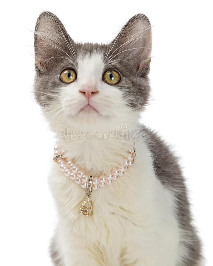Closeup Cute Kitten Wearing Pearl Necklace. Closeup portrait of cute grey and white kitten wearing pearl necklace collar stock images