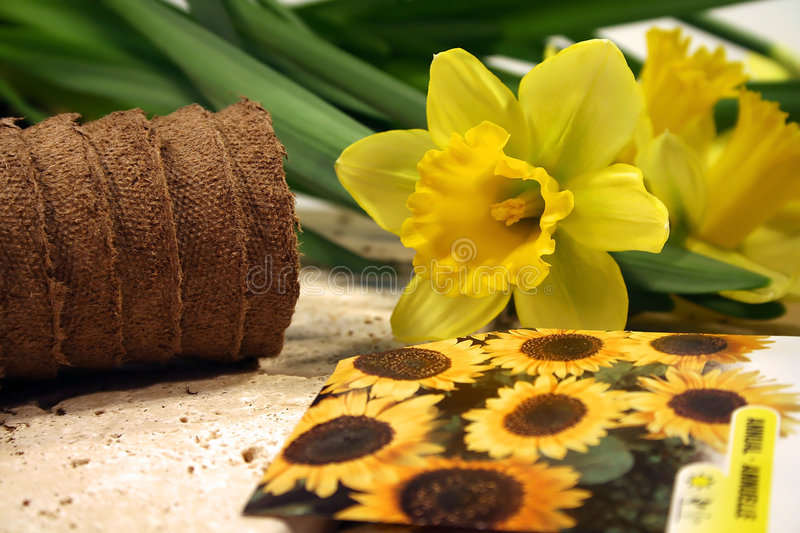 Closeup of daffodils. Spring gardening preparation royalty free stock photography