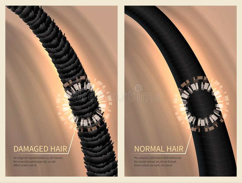 Closeup damaged harsh and normal healthy hair. Vector illustration for haircare concept. Healthy hair and banner care for shampoo royalty free illustration