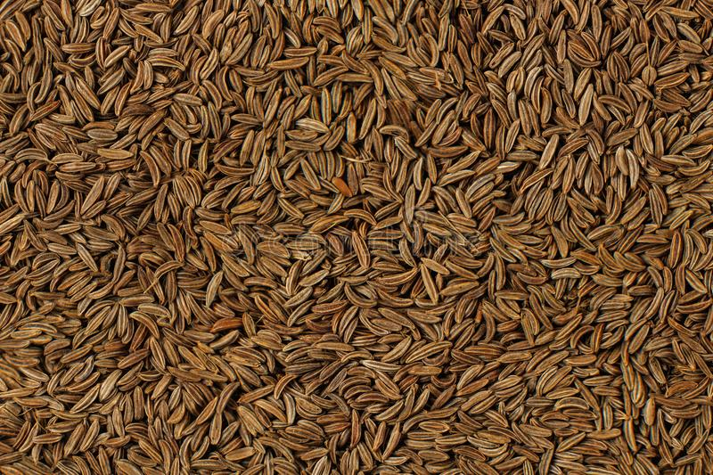 Closeup detail of caraway seeds meridian fennel - Carum carvi royalty free stock photography