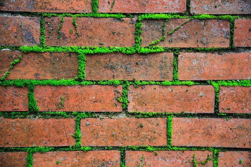 Closeup detailed old aged textured vintage retro red brown brick block wall surface wallpaper backdrop with green life plant in co stock images