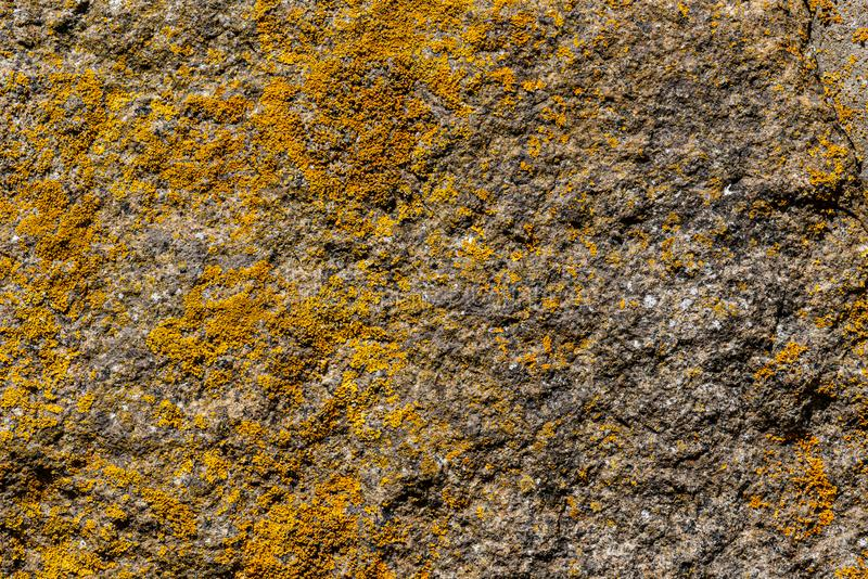 Closeup of a detailed stone rock surface covered with natural yellow and orange lichen moss texture. stock image