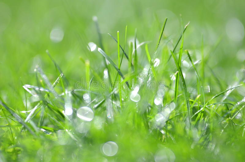 Closeup of dewed grass with bokeh. Effect stock photography