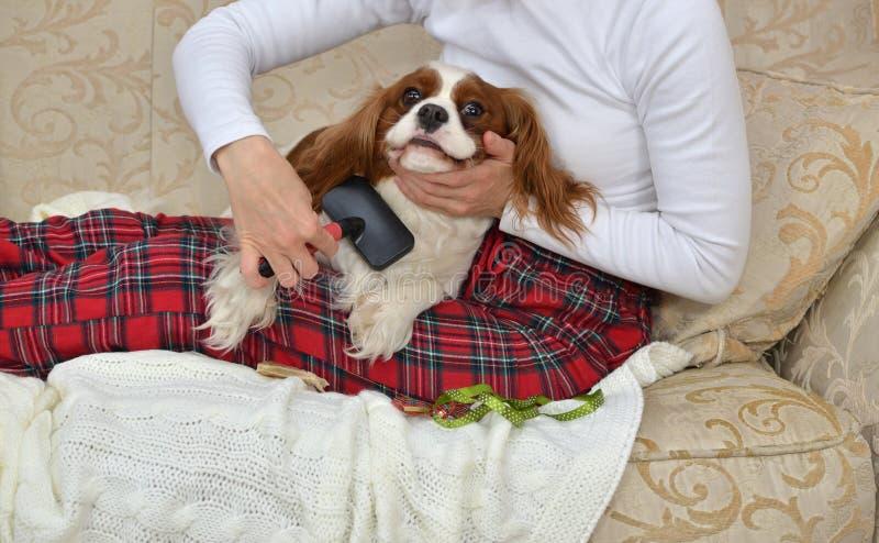 Closeup of Dog Brushing royalty free stock photo