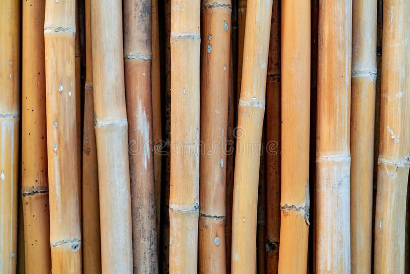 Closeup dried bamboo pole texture background. Eco background. Nature material for handmade work in Thailand. Brown bamboo fence. royalty free stock photography