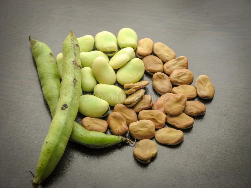 Closeup of dry and fresh broad beans seeds Vicia faba and  fresh picked raw broad beans in the pod on wooden table stock image