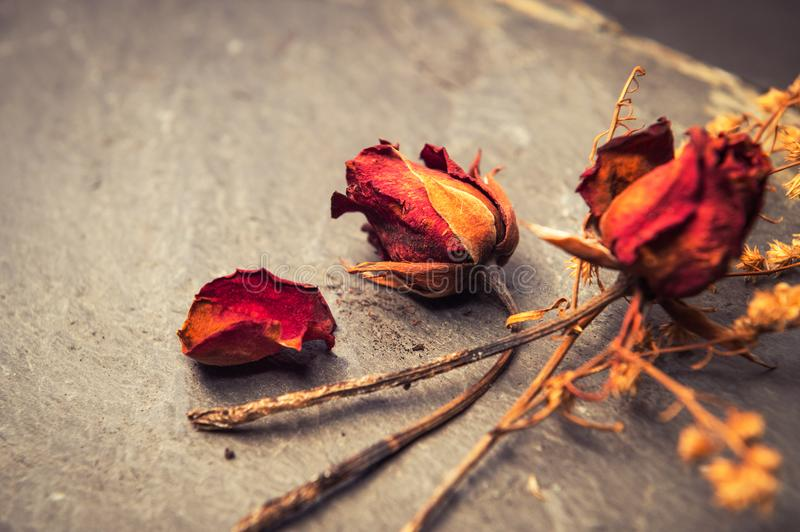 Closeup of Dry Rose Flower on Stone royalty free stock image