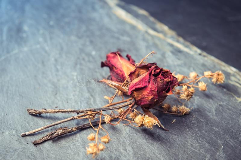 Closeup of Dry Rose Flower on Stone royalty free stock photos