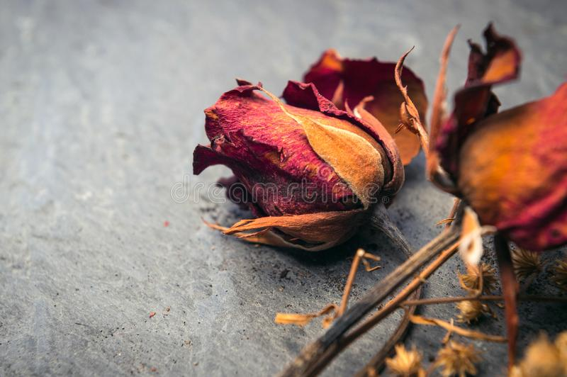 Closeup of Dry Rose Flower on Stone stock images