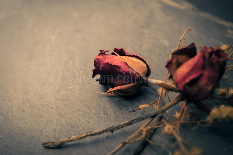 Dry Rose Flower on Stone, Memory Love Conception stock photography