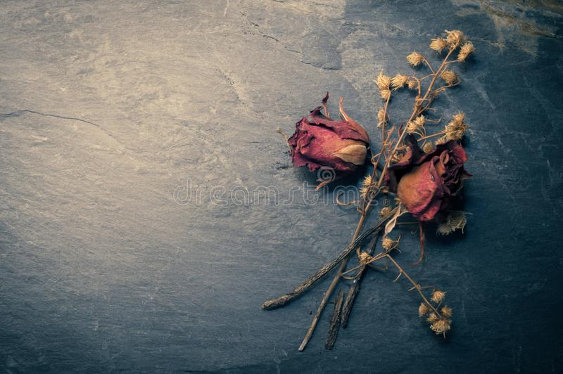 Dry Rose Flower on Stone, Memory Love Conception stock photos