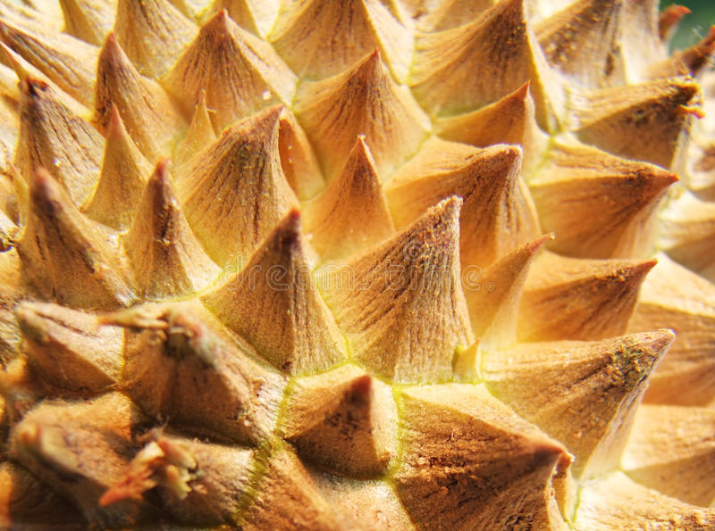 Closeup of durian fruit skin royalty free stock photos
