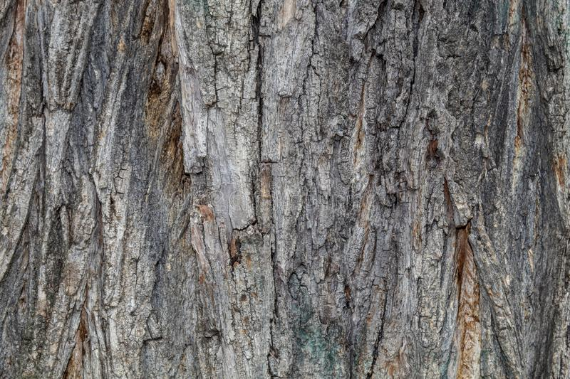 Closeup Embossed Tree Bark Texture For Background or Overlay. Closeup of tree bark texture with moss. Texture is useful for background image or as overlay to royalty free stock images