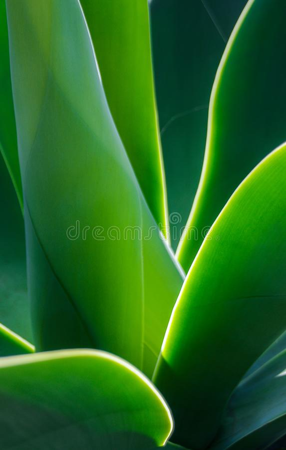 Closeup of evening sun lighting edges of green leaves stock images