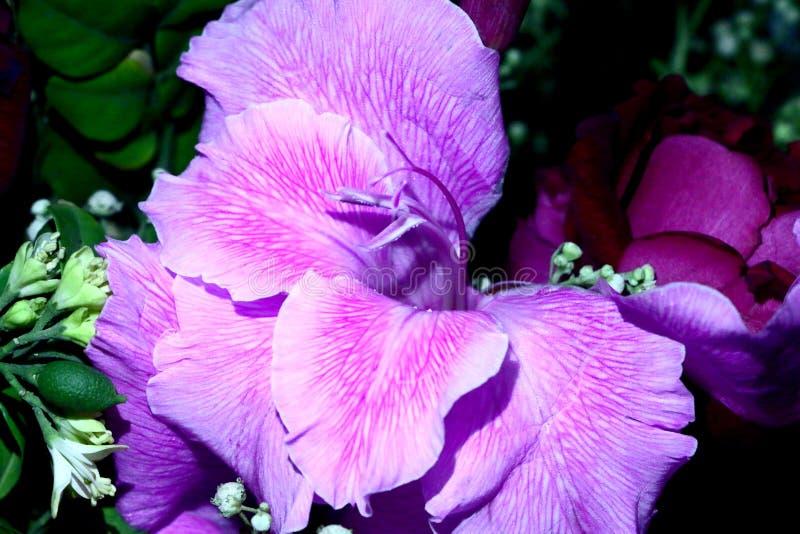 Closeup för fyra rosa färgblommor arkivbilder