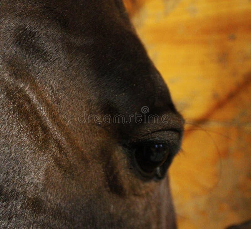 Closeup för hästögonvinkel arkivbild