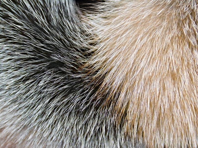 Closeup för päls för arktisk räv som bakgrund royaltyfria foton