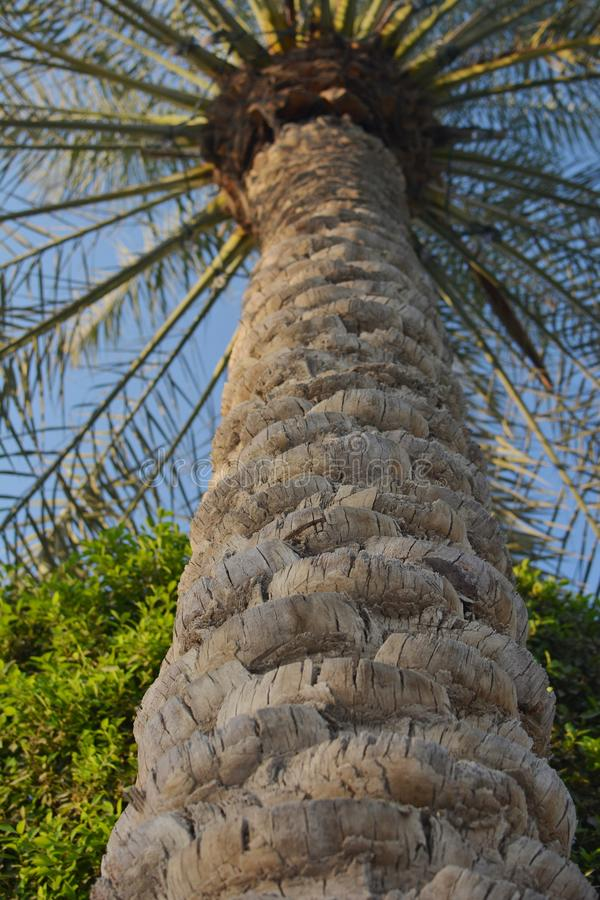 Closeup för palmträdstam Saftig gräsplan arkivfoton
