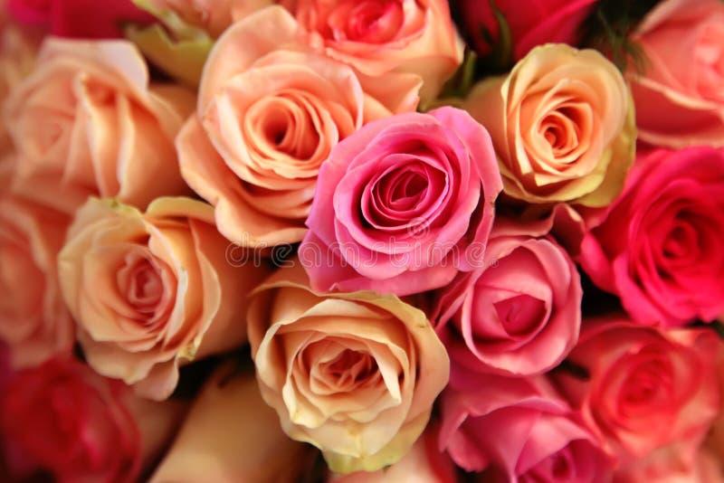 Closeup för rosa och gula rosor royaltyfri fotografi