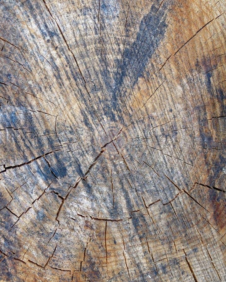 Closeup för snitt för trädstam, träbakgrund royaltyfria foton