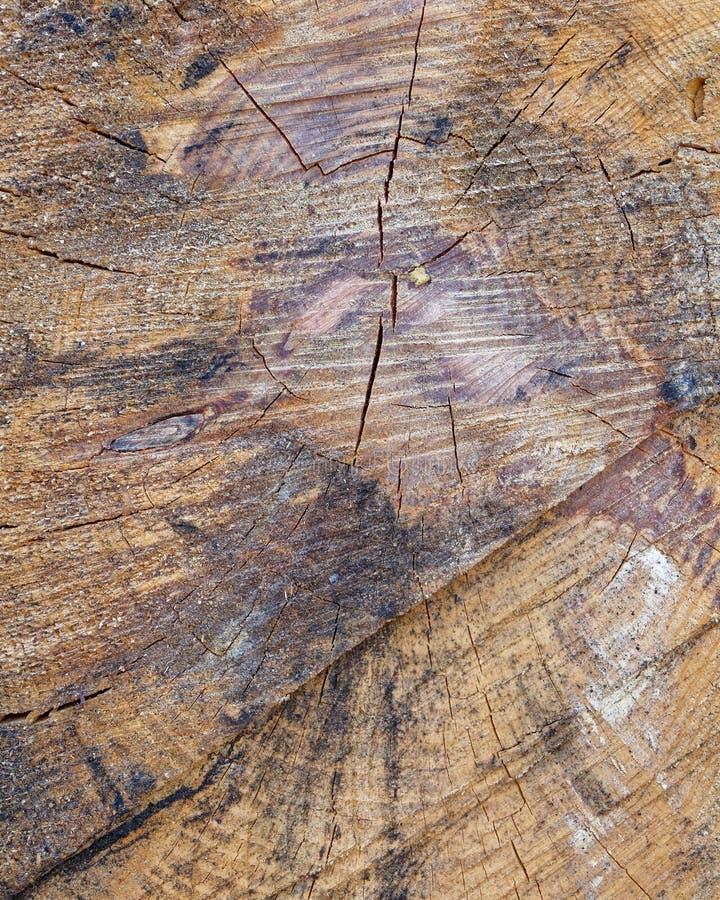 Closeup för snitt för trädstam, träbakgrund royaltyfria bilder