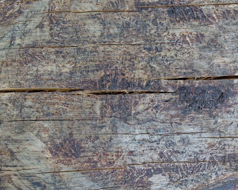 Closeup för snitt för trädstam, träbakgrund arkivfoton