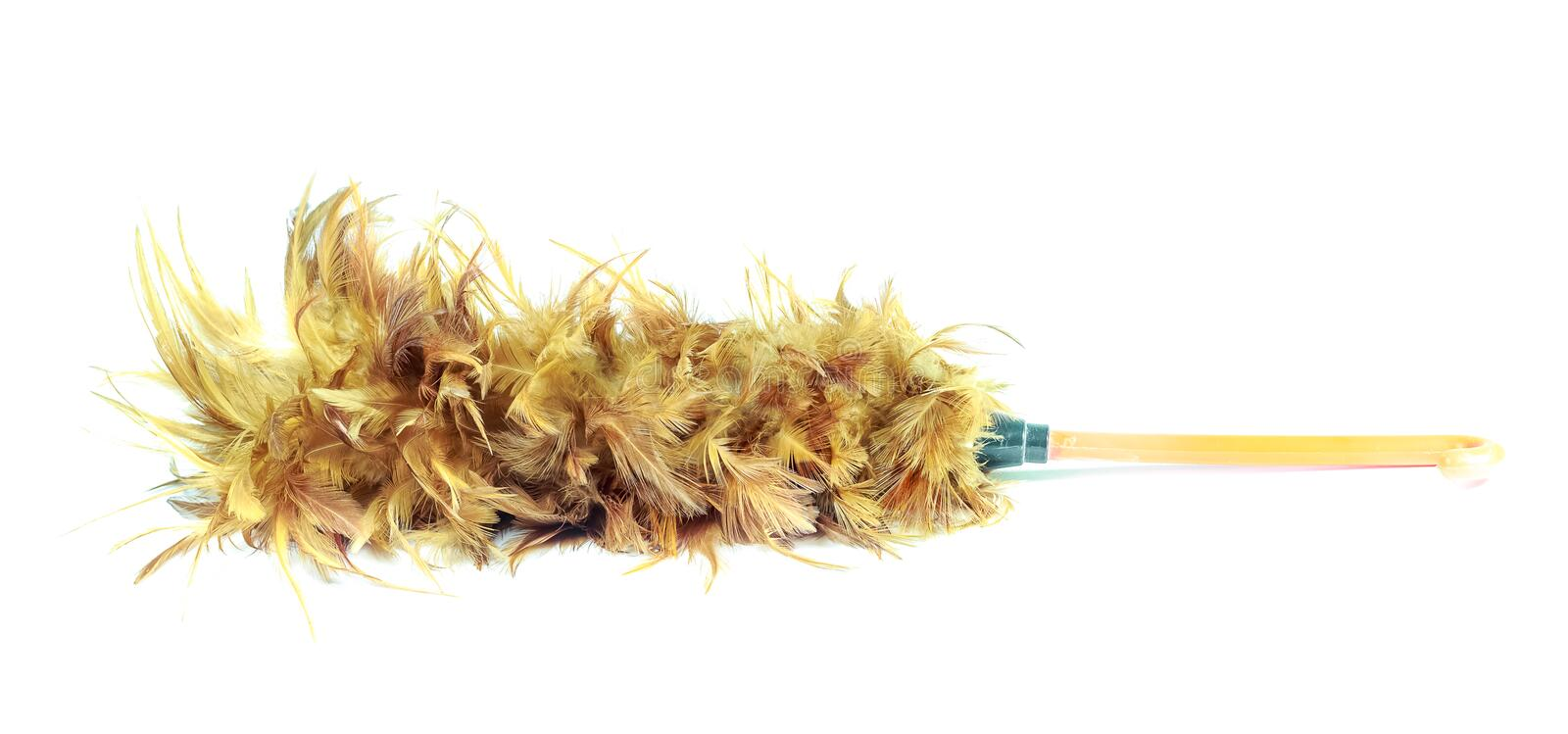 Closeup feather duster on white background stock photography