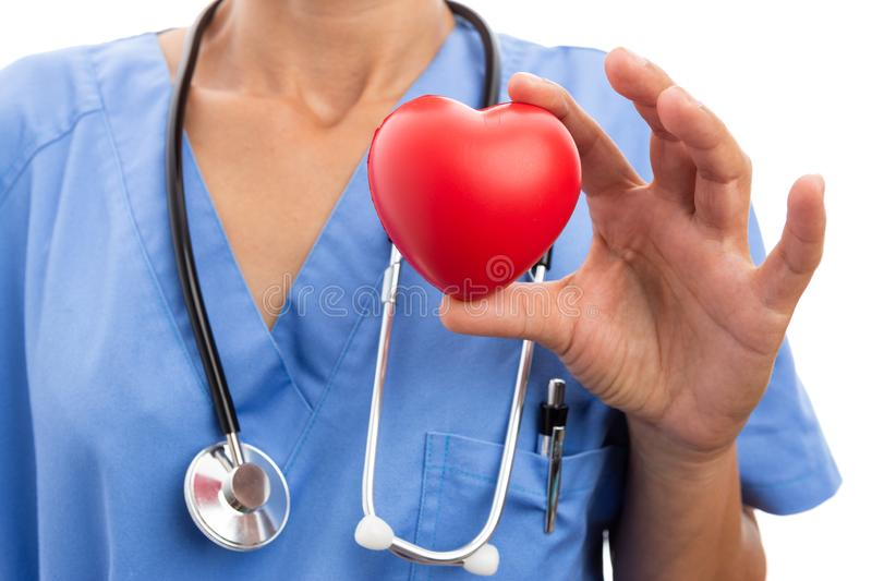 Closeup of female doctor cardiologist holding toy red heart royalty free stock images