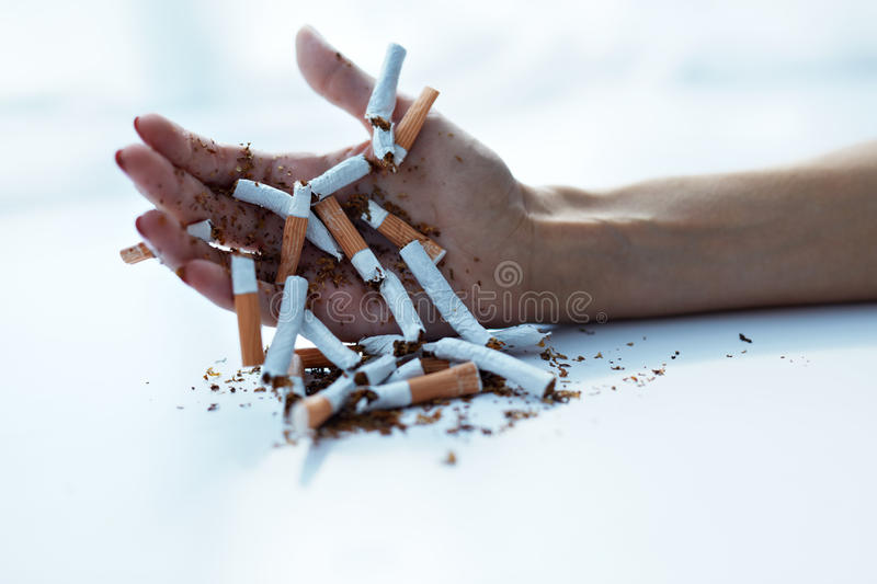 Closeup Of Female Hand Holding Cigarettes. Quit Smoking. Quit Smoking Cigarettes. Closeup Of Beautiful Woman Hand Holding Lots Of Cigarettes. Close-up Of Female royalty free stock images