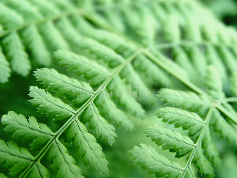Download Closeup of a Fern stock image. Image of concepts, exposed - 17843