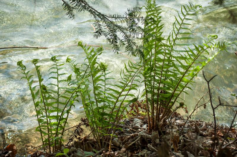 fern leaves in border water stock photography