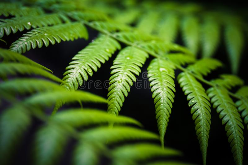 Closeup Fern Leaves stock photo