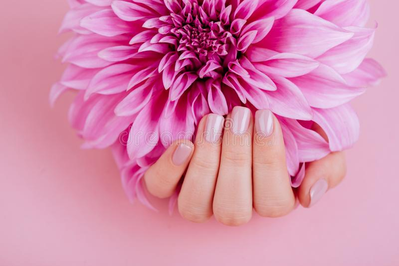 Closeup fingernails with pink fashion manicure. Cupped woman beautiful manicured hands holding pink flowers stock images