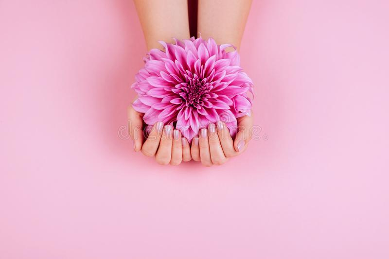 Closeup fingernails with pink fashion manicure. Cupped woman beautiful manicured hands holding pink flowers royalty free stock images