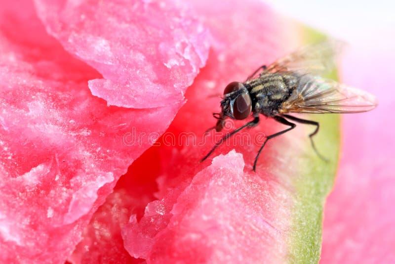 Download Closeup of flies stock photo. Image of head, hemp, color - 22655730