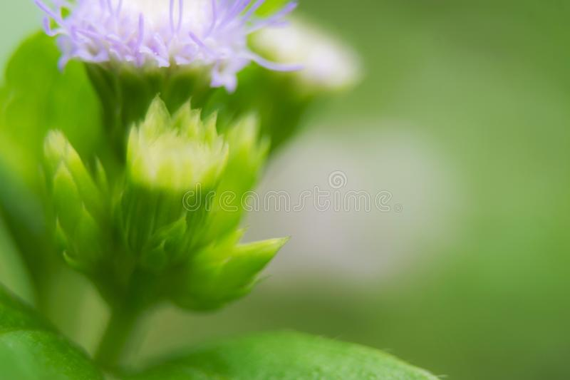 Closeup flowers in nature it soft focus for background concept. Closeup flowers in nature it soft focus for background concept royalty free stock photos