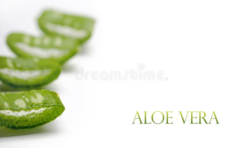 Closeup of fresh aloe vera plant leaf cut slices isolated over white background stock images