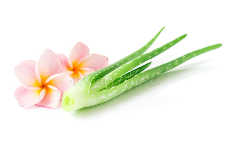 Closeup fresh aloe vera with plumeria on white background, beaut. Y and healthy care concept stock photos