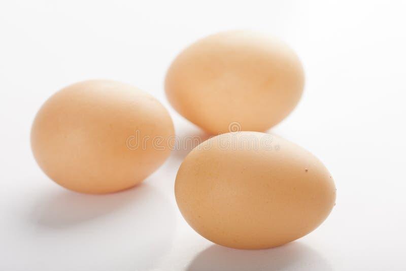 Closeup of Fresh Eggs isolated royalty free stock photos