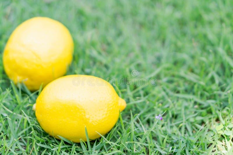 Closeup fresh lemon fruit on green grass background, selective focus. Closeup fresh lemon fruit on green grass background stock images