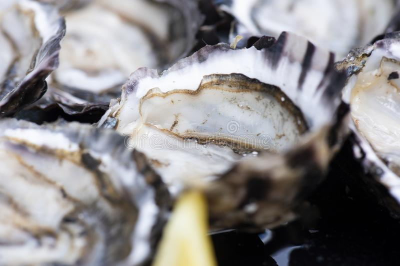 Closeup of fresh shucked oysters. stock image