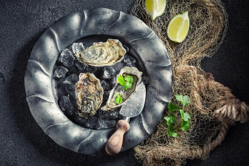 Closeup of fresh and tasty oysters with lemons and coriander stock photo