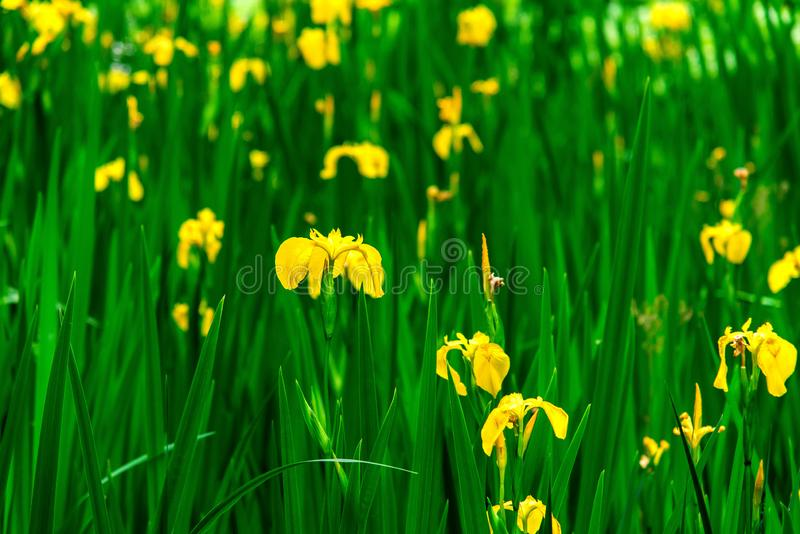 Unkown blossoming floewers in summer days royalty free stock photography