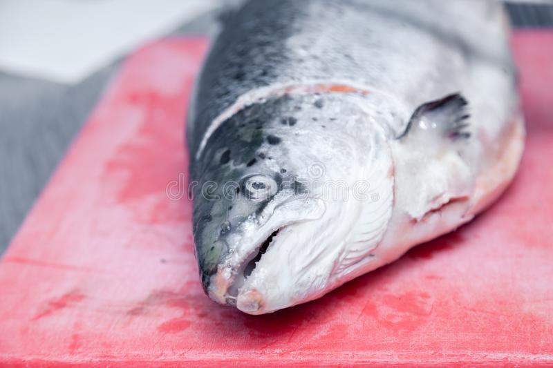 Closeup fresh whole salmon fish on red plastic cutting board in professional kitchen of restaurant is preparing for carving. stock images