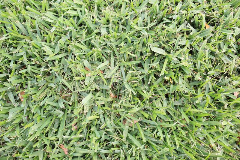Closeup of Freshly Mowed Green Grass Lawn Background royalty free stock photography
