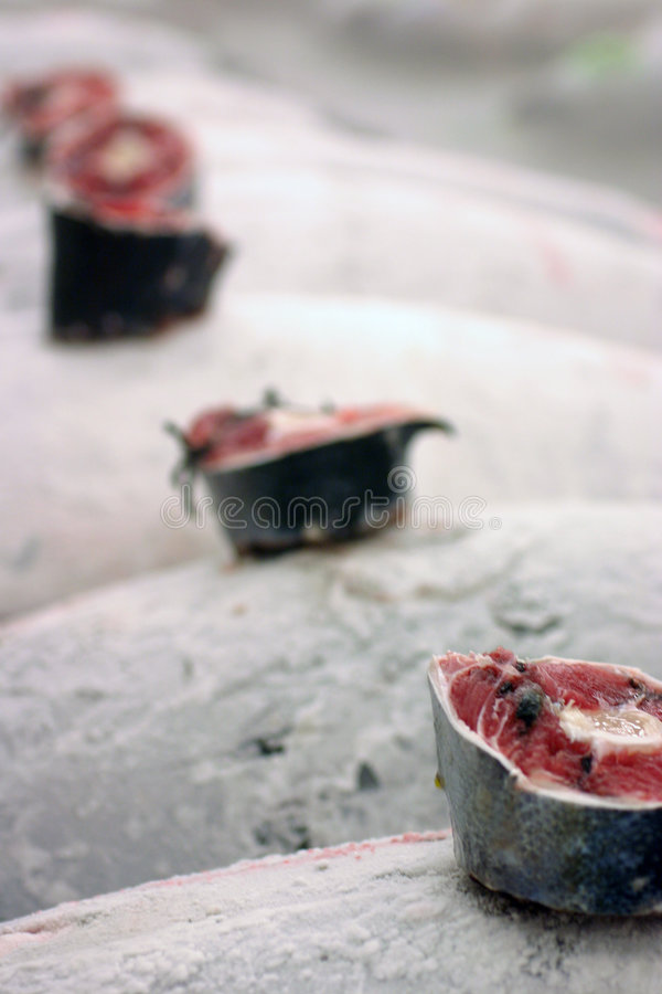 Closeup of frozen tuna at auction in Tokyo stock photography