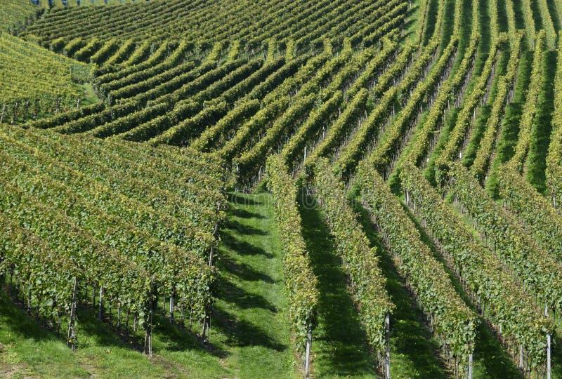 Geometric vineyard landscape royalty free stock images