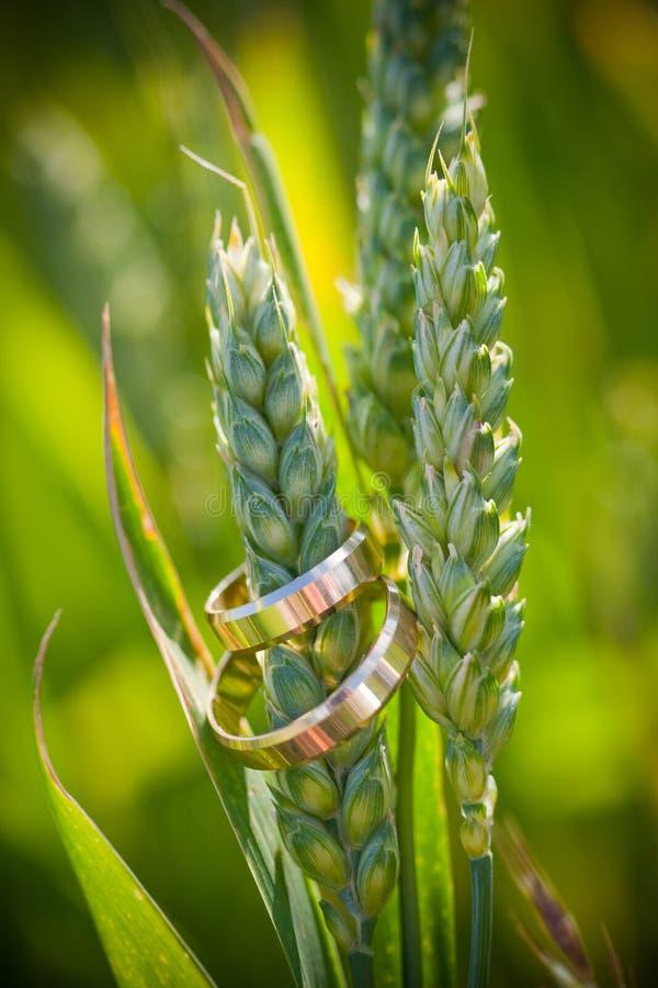 Closeup Of Gold Wedding Rings Stock Photos