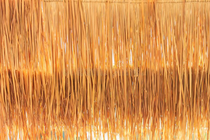 Closeup golden grasses thatch roof for wallpaper. Closeup golden grasses thatch roof covering with sunlight for wallpaper stock image