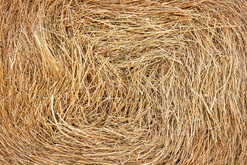 Closeup of golden hay roll circular haystack, texture stock images